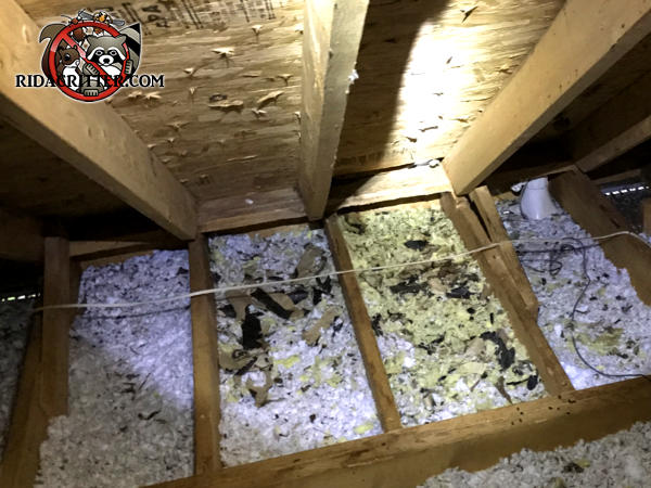 Flattened out and animal contaminated insulation between the joists of an attic in Atlanta needs to be replaced