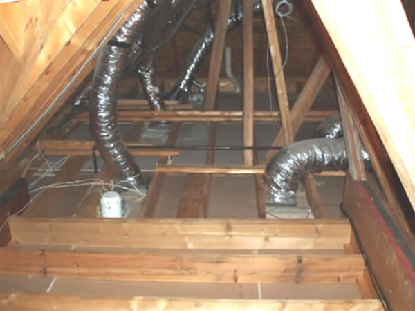 Insulation Replacement Animal Contamination Cleanup