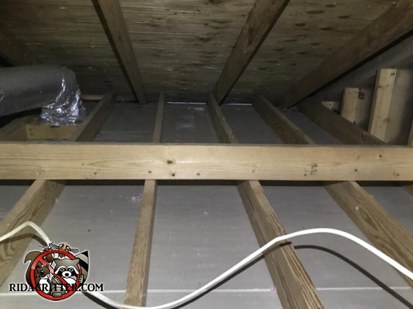 Very clean unfinished floor in an Attic in Atlanta after the contaminated insulation has been removed and disposed of