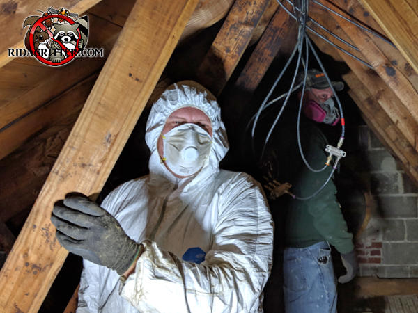 Men wearing protective clothing and respirators removing animal contaminated insulation from the attic of a house in Valdosta Georgia