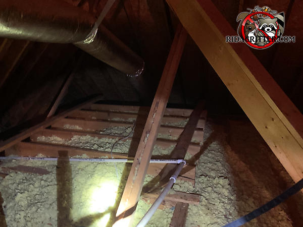 The insulation in the attic in a house in Stone Mountain Georgia is dirty and flattened out due to animal activity