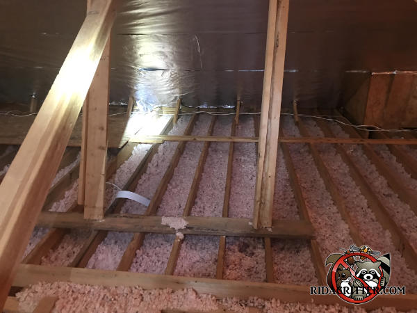 Insulation in the attic of a house in Roswell Georgia has been flattened out by animals and needs to be replaced