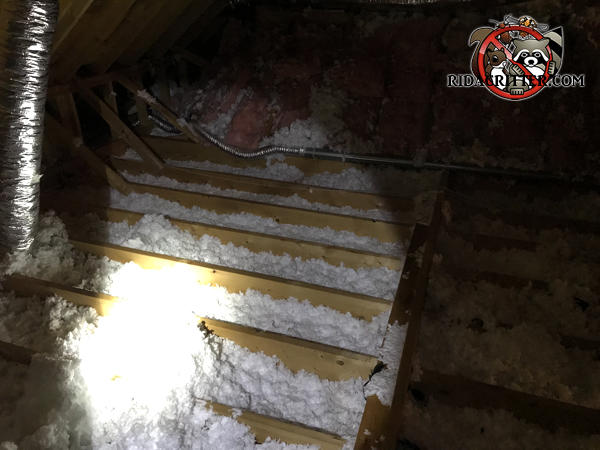 Attic insulation in a house in Alpharetta Georgia has been flattened out by animals and needs replacement