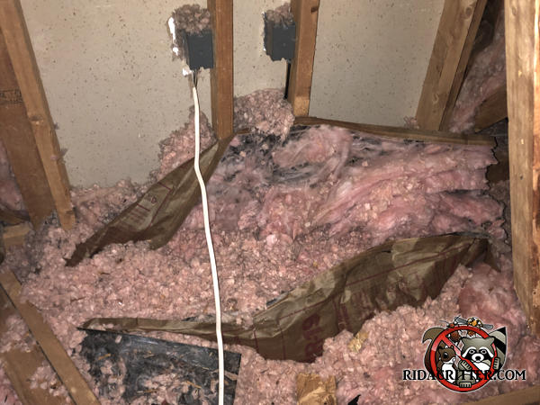 Dirty attic insulation is pulled down from the walls and contaminated with animal filth in the attic of a house in Valdosta Georgia
