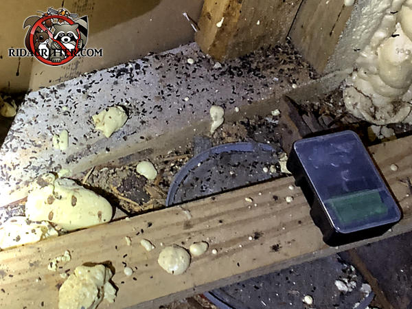 Large amount of mouse droppings near an untouched rodenticide bait station in the attic of a house in Atlanta.