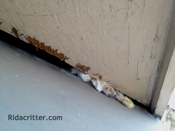 Elegant Gap In Garage At Roswell Mouse Extermination Job