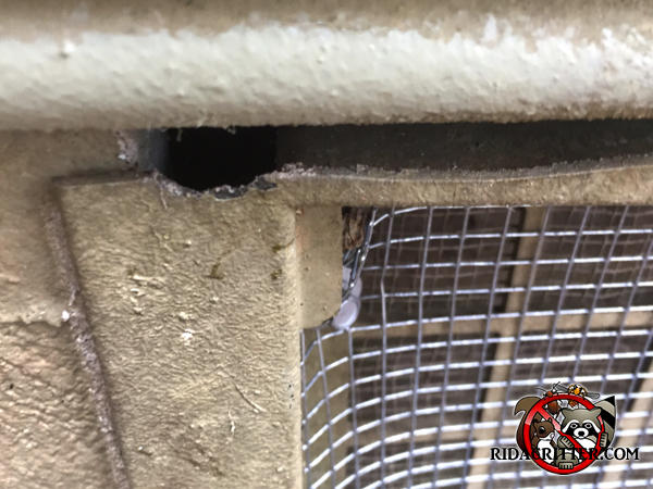 A handyman applied screening over a foundation vent but the mice gnawed their way into the house through the top flange of the plastic vent cover.