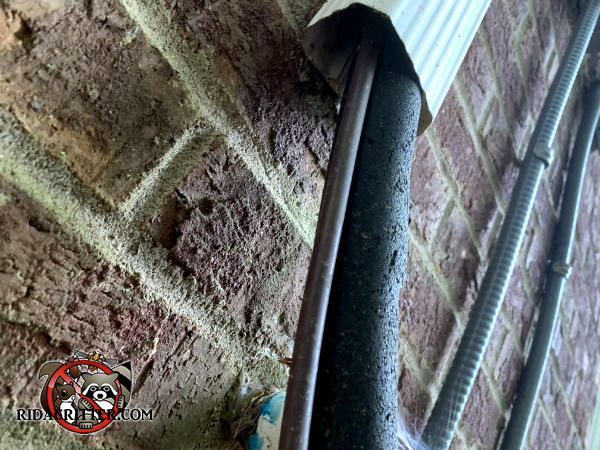 Vertical downspout with one insulated and one uninsulated air conditioning line running through it allowed mice to climb to the attic of an Atlanta home