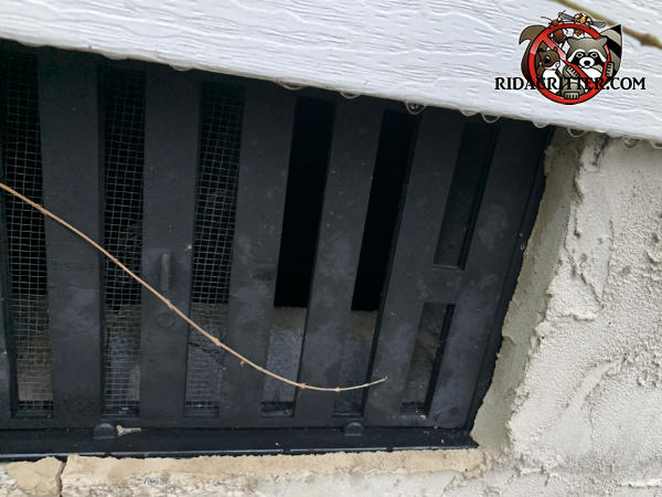Mice gnawed away the screen behind the openings between three vertical slats of a plastic foundation vent cover to get into the crawl space of a house in Chattanooga