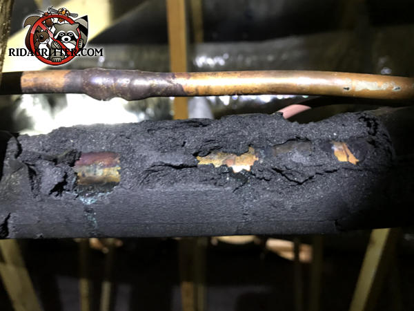 Mice chewed through the insulation on the air conditioning refrigerant pipes in a house in Cumming Georgia