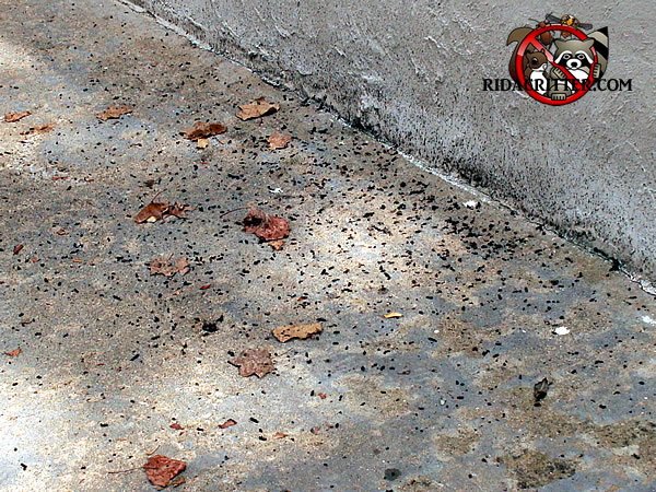 Mouse Extermination And Control Athens Georgia Area