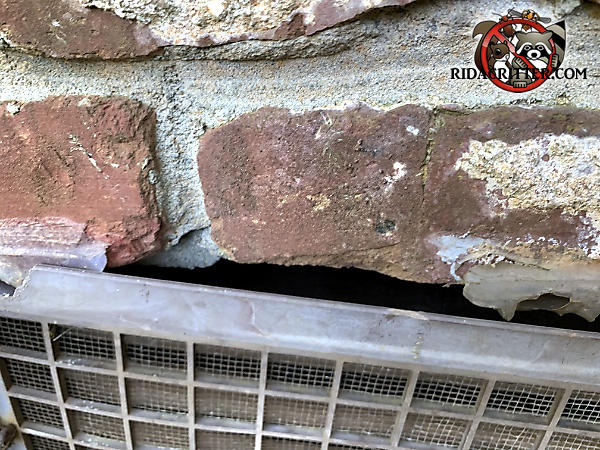 There is a gap between the top of the foundation vent and the bricks that allowed mice to get into a house in Atlanta