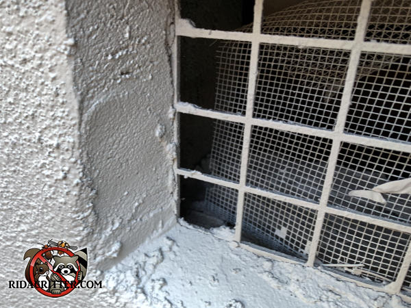 The screen behind the foundation vent is detached from the lattice on one side and mice got in through the opening