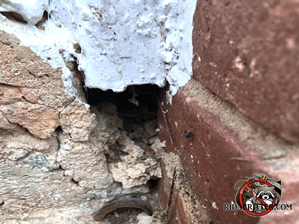 The mortar has crumbled away creating a quarter sized hole in the brick wall that allowed mice into a house in Atlanta