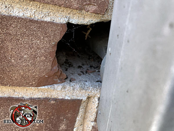 Mouse droppings in the space around a generator conduit where it passes through the brick wall of a house in Atlanta