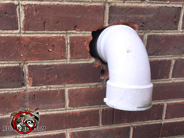 There is a gap around a pipe where it passes through the brick wall and mice got in through the gap