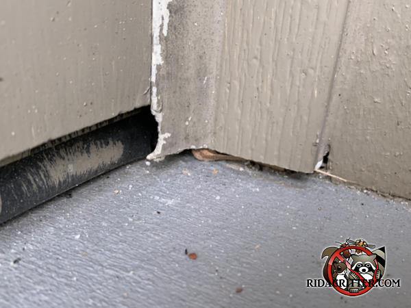 Mice chewed through the garage door frame of a house in Auburn Georgia. It was then painted over.