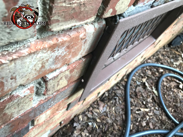 Mice got in because the foundation vent is sticking out about three quarter inch from the bricks of a house in Birmingham Alabama