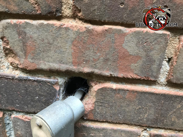 Conduit body fell out of the hole in a brick wall because there was no actual conduit attached to it and mice got in through the gap