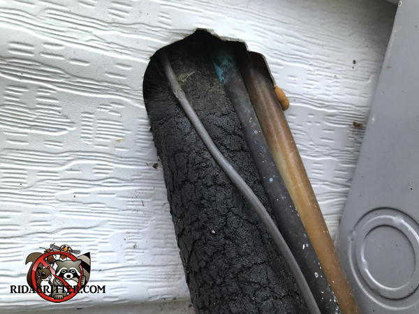 Mice climbed up the insulated refrigerant line and through the hole in the wall to get into a house in Dunlap Tennessee