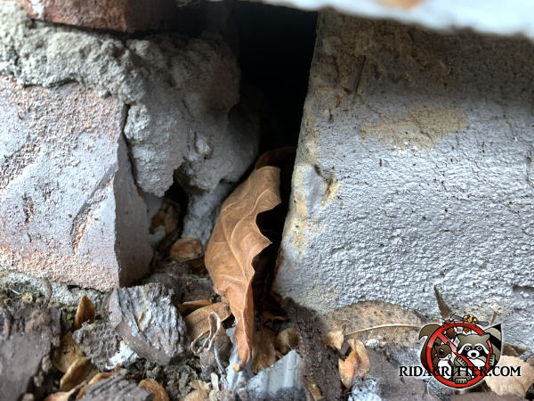 One inch gap between two bricks at ground level through which mice got into a house in Atlanta
