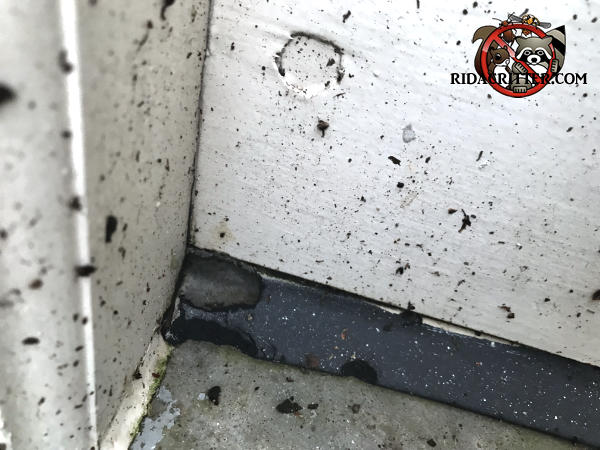 Mice gnawed an oblong hole about the size of a finger print in the rubber weather seal on the bottom of a garage door at a house in Dunwoody Georgia.