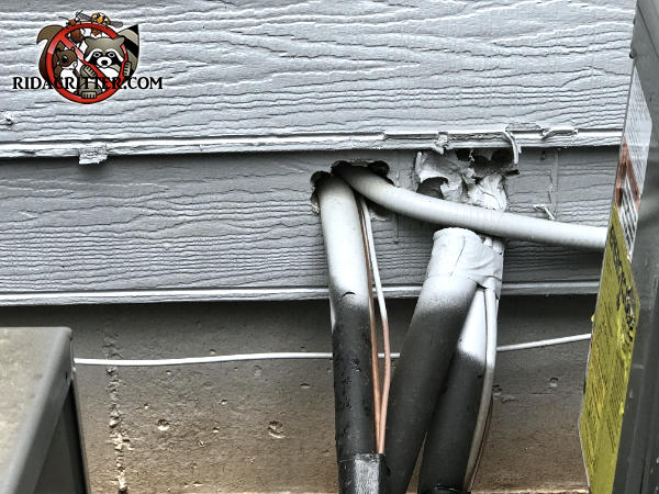 Mice got into a Harrison Tennessee home through gaps around the air conditioning lines where they pass through the siding