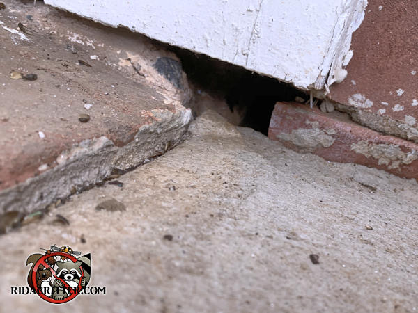 Settling of the concrete has opened a hole in the wall through which mice got into a house in Ball Ground Georgia