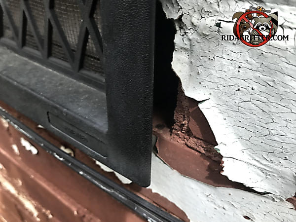 Mice got into a house in Dallas Georgia because the foundation vent was sticking out about half an inch from the bricks