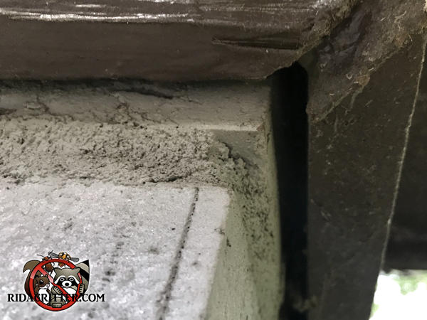 The trim has pushed away from the house at the foundation right by the mortar joint creating a mouse entry gap