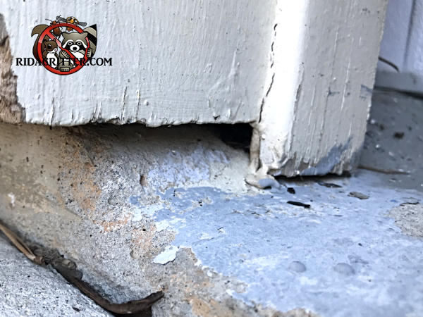 Mouse Extermination And Control Atlanta Marietta
