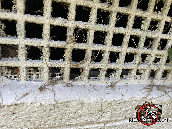 The screen behind the foundation vent has rotted away and need to be replaced as part of an Atlanta mouse control and exclusion job.