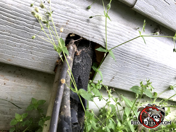 Insulated air conditioning pipes going through the siding of a house in Soddy Daisy Tennessee that were easy for mice to climb