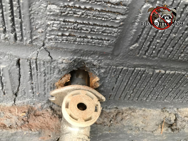 Outside spigot on a house in Decatur Georgia was not secured to the bricks and is protruding about an inch and mice got into the house through the gap