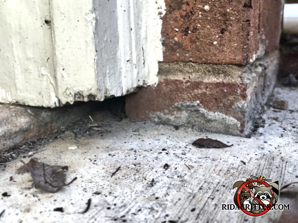 Gap between the bricks and the pavement at a house in Sylvester Georgia allowed mice into the house