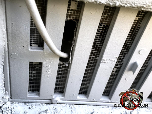 The mice got in through a hole that the cable installer poked through the foundation vent screen at a house in Valdosta Georgia