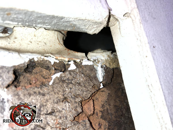 Sagging caulk under the siding where it meets the foundation allowed mice to get into a house in Valdosta Georgia