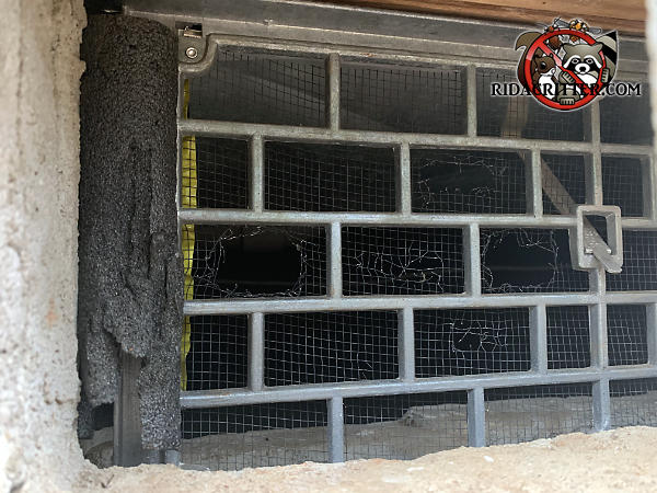 Mice gnawed holes through the screening behind the lattice of an improperly installed metal foundation vent cover that was sealed to the foundation with foam pipe insulation