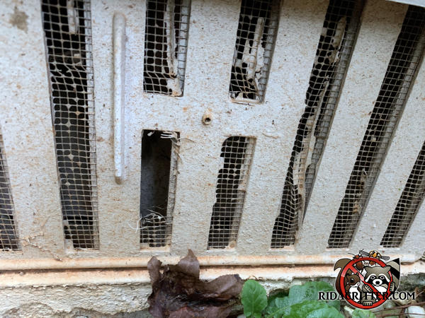 Mice gnawed through the screen behind a foundation vent cover between two vertical slats to get into the crawl space of a house in Snellville Georgia.