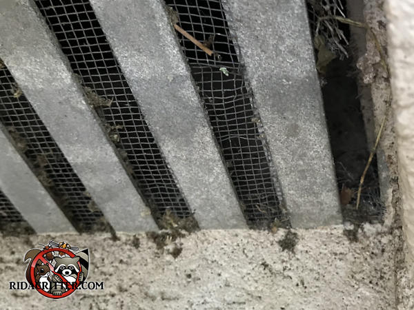 Mice gnawed through the far right side of the screen behind a metal foundation vent cover to get into a house in Birmingham Alabama.