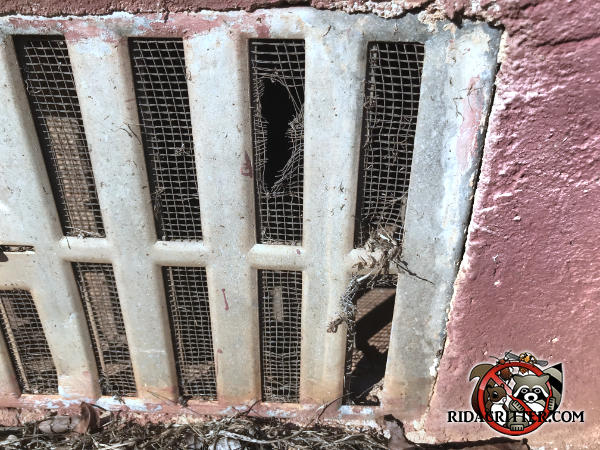 Mouse gnaw holes through the corroded screen behind a foundation vent at a house in Jefferson Georgia