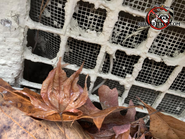 The foundation vent screen behind the lattice has detached in the lower left corner and allowed mice into a house in Jonesboro Georgia