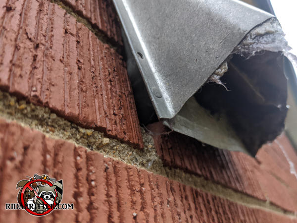A half inch gap between the bottom flange of the metal dryer vent and the brick wall allowed mice to get into a house in Signal Mountain Tennessee