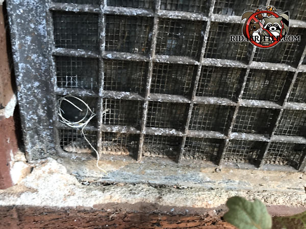 Mice gnawed through the screen behind a foundation vent to get into a house in Toccoa Georgia