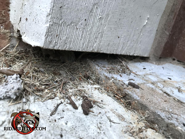 Small gap between the bottom of the trim and the concrete allowed mice into a house in Alpharetta Georgia
