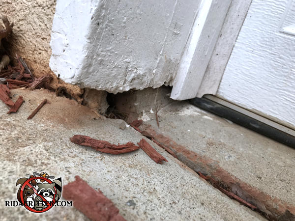 Gap between the wooden trim and the concrete pavement at an expansion joint allowed mice into a house in Alpharetta Georgia
