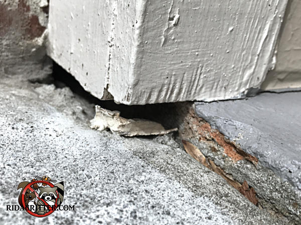 Gap between the bottom of the wooden corner post and the concrete walkway allowed mice into a house in Atlanta