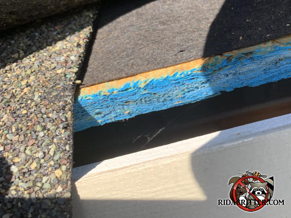 Lifted shingle reveals a half inch gap in the roof that needs to be sealed as part of mouse proofing a house in Atlanta.