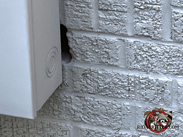 Irregular gap about the height of a brick and the width or a mortar joint along the edge of an electrical box allowed mice into a house in Atlanta.