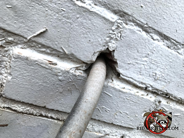 Half inch gap above a flexible electrical conduit where it goes through the brick wall of an Atlanta home allowed mice to climb the conduit and get into the house.